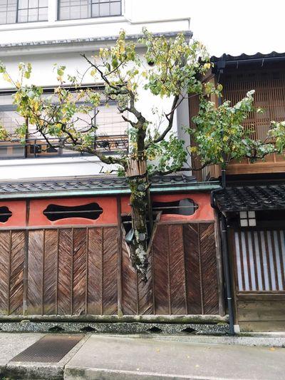 Urban Nature Exquisite Japan Tree Nature Rules
