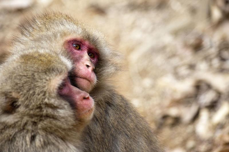 Close-up of monkey
