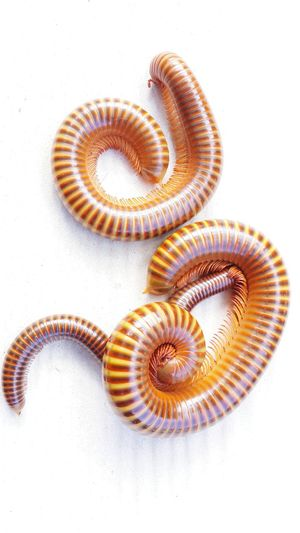High Angle View Of Worms On White Background