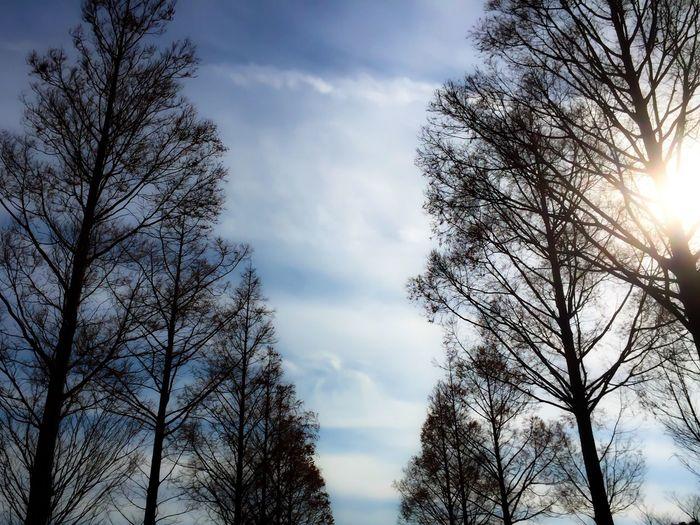 Tree Sky Low