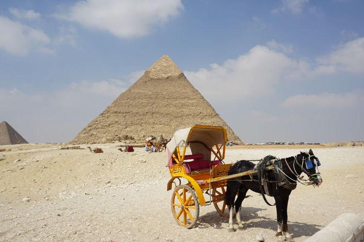 Horse riding cart