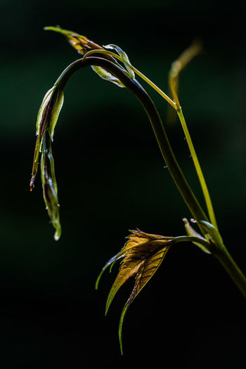 Beauty In Nature Close-up Focus On Foreground Fragility Freshness Growth Nature No People Outdoors Plant Vulnerability