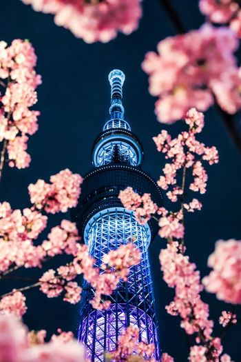 skytree with