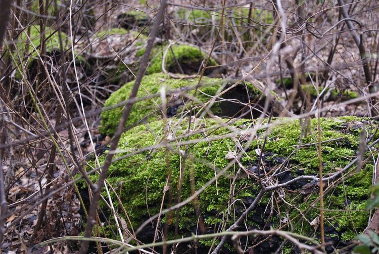 Nature Forest Outdoors Green Color No People Beauty In Nature Moss Tree Close-up Day Growth