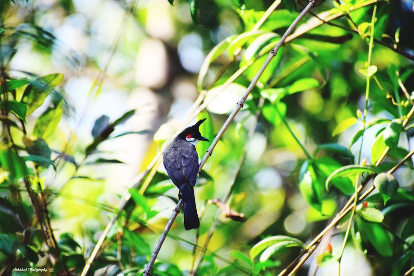Bird Bird Photography Clicked On Nikon D3300 Bird On A Branch