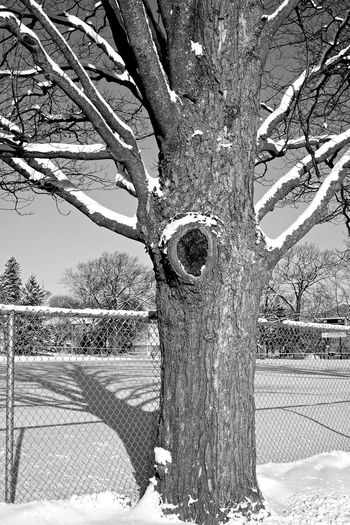 snow covered landscapes Barrie Branches Cold Covered Fence Shadows Snow Trees Winter Wintertime
