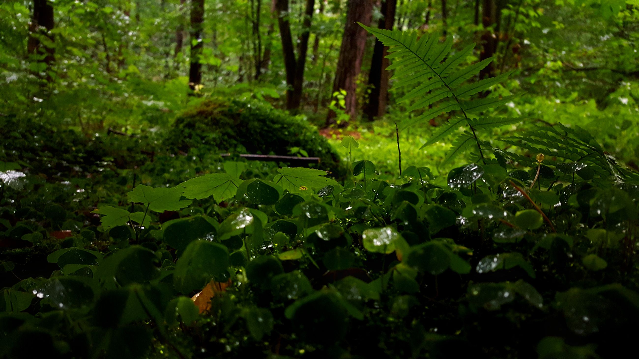 nature, growth, green color, tree, leaf, forest, beauty in nature, tranquility, no people, leaves, outdoors, day, freshness