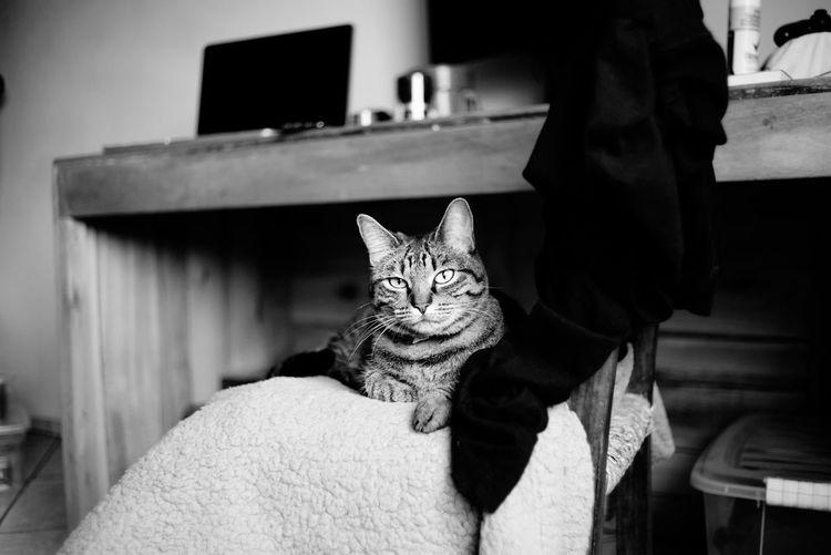 Portrait of cat sitting at home