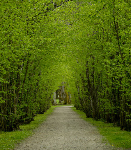 Beauty In Nature Day Footpath Grass Green Green Color Growth Long Narrow Nature No People Outdoors Pathway Plant The Way Forward Tranquil Scene Tranquility Tree Treelined Vanishing Point Walkway The Great Outdoors With Adobe The Great Outdoors - 2016 EyeEm Awards