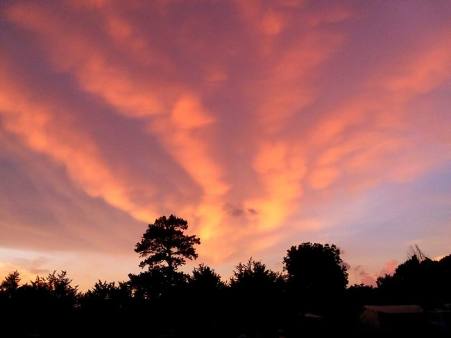 Sunset Silhouettes Beauty In The Clouds Colorful Multicolored Sky Steormy Skies At Sunset. Beauty Can Be Dangerous Tree Silhouette Dramatic Sky Atmospheric Mood Thunderstorm Romantic Sky Cumulonimbus Storm Cumulus Moody Sky Overcast Meteorology Storm Cloud Torrential Rain Treetop