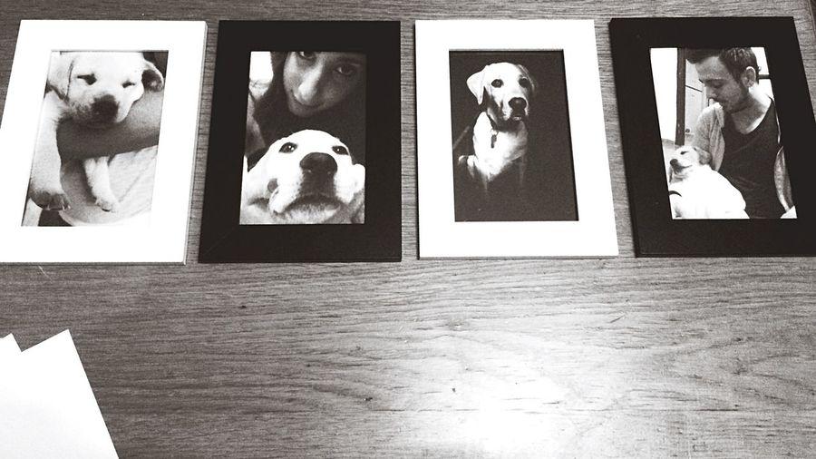 Love 👫❤️🐶 Dog