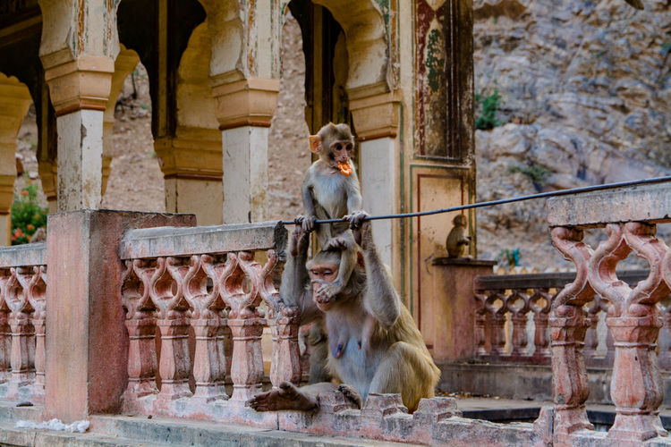 Monkeys At Ruined Temple