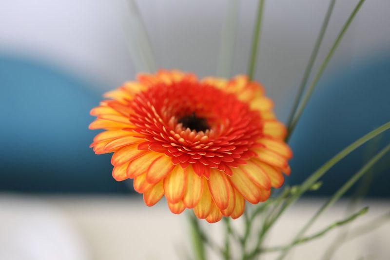 🌱🌼🌿 Flower