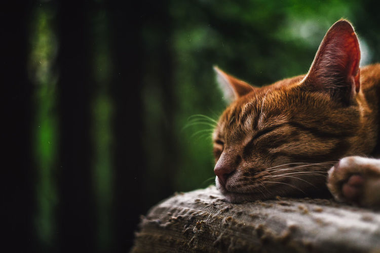 20170719 - Cat Cats Of EyeEm Cats 🐱 Animal Themes Cat Cat Eyes Cat Lovers Cat Photography Catlovers Catoftheday Cats Catsagram Catsofinstagram Cat♡ Close-up Day Domestic Animals Domestic Cat Feline Mammal Nature No People One Animal Outdoors Pets