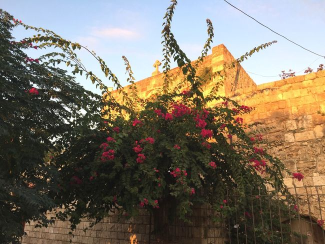 Low Angle View Growth Outdoors Day No People Architecture Flower Building Exterior Nature Beauty In Nature Tree Sky Church Bougainvillea Tree