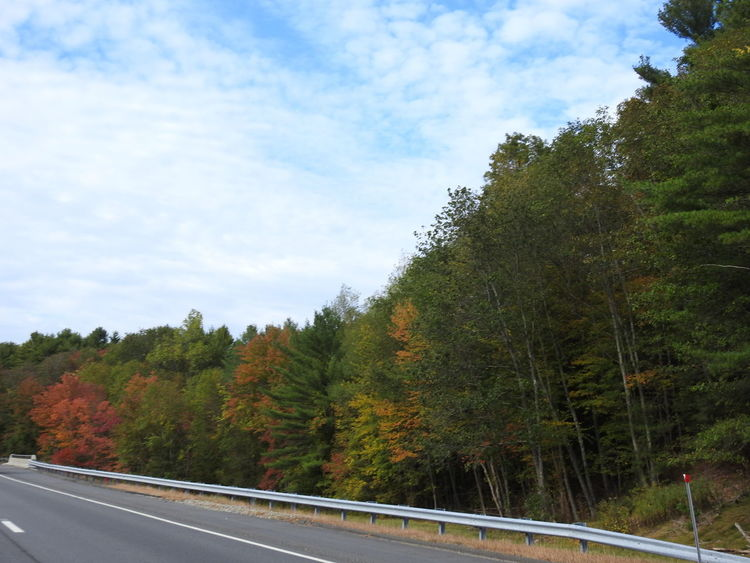 Autumn Autumn Colors Autumn In New England Autumn Leaves Checking Out The View Fall Beauty Fall Colors Road Trip Photograpghy The Leaves Change Colors Autumn On The Streets Beauty In Nature Fall In New England Forest Landscape Nature No People Outdoors Road Scenery Sky Tranquility Transportation Tree View From The Car View From The Road
