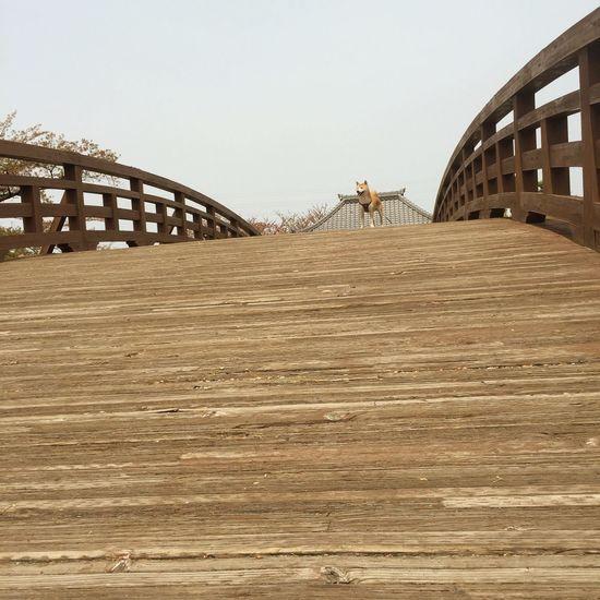 たそがれ。 柴犬 Shibainu Shibadog Dog