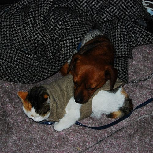 Cane e gatto, dog and cat