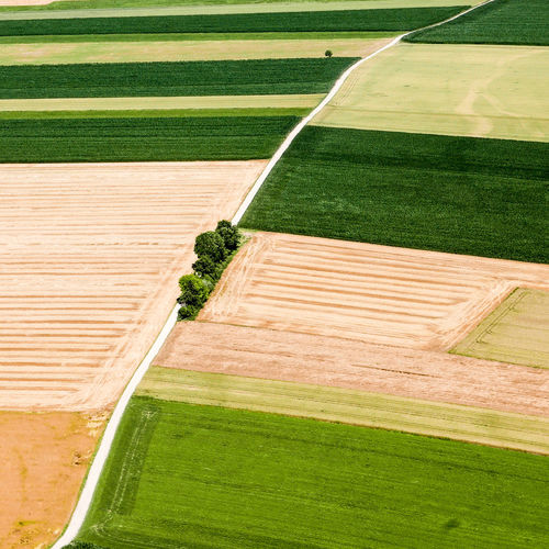Aerial view of green landscape