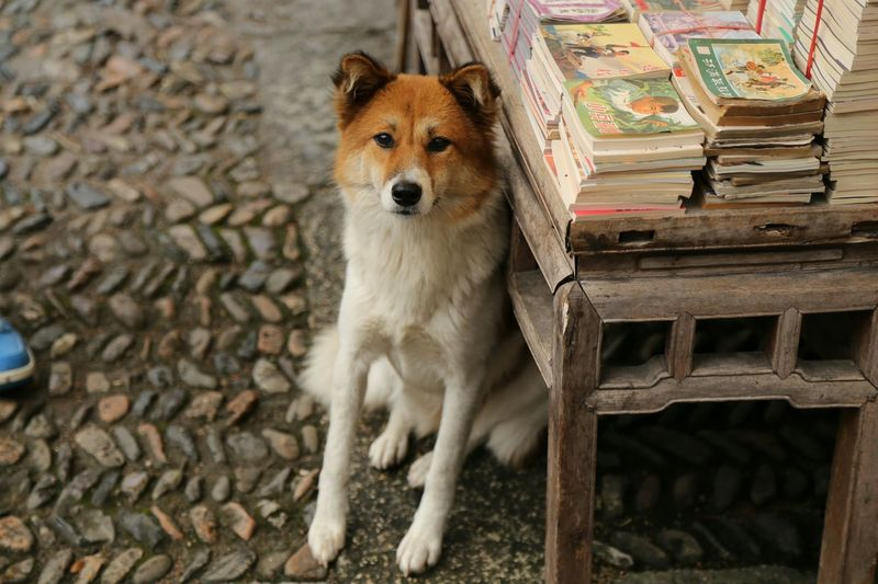 The Purist (no Edit, No Filter) Anhui,China Oldtown Old Town Dog Books Comic Books Dogs
