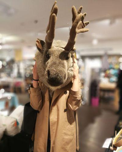 EyeEm Selects Deer Deer Head Toy Deerman Fluffy Indoors