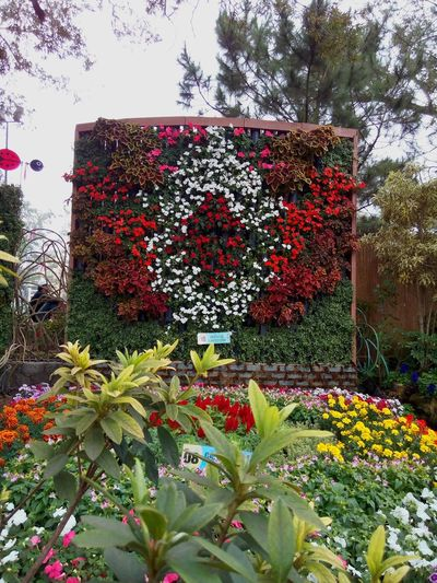 Vertical Garden Panagbenga PanagbengaFestival Landscape_Collection Landscape_photography Flowers,Plants & Garden Flowers