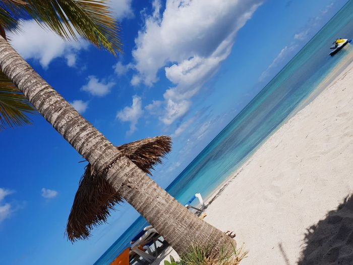Low angle view of coconut palm trees on beach against sky