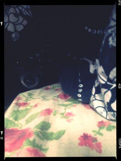 Snugglin With Lola Nanook