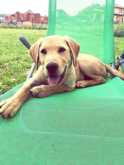 Happy dog Summer Happy One Animal Canine Dog Mammal Pets Domestic Domestic Animals Animal Mouth Animal Body Part No People Day Portrait Vertebrate Relaxation Green Color Looking At Camera Comfortable