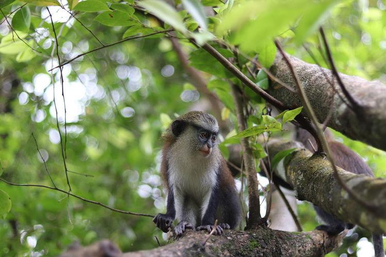 Tree Branch Defocused Sitting Perching Animal Themes Close-up Monkey