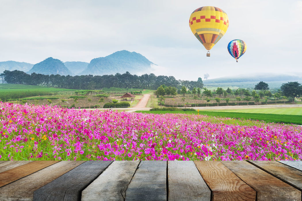Adventure Beauty In Nature Cosmos Day Flower Flying Grass Growth Hot Air Balloon Landscape Mountain Nature Nature Sky Transportation Tree