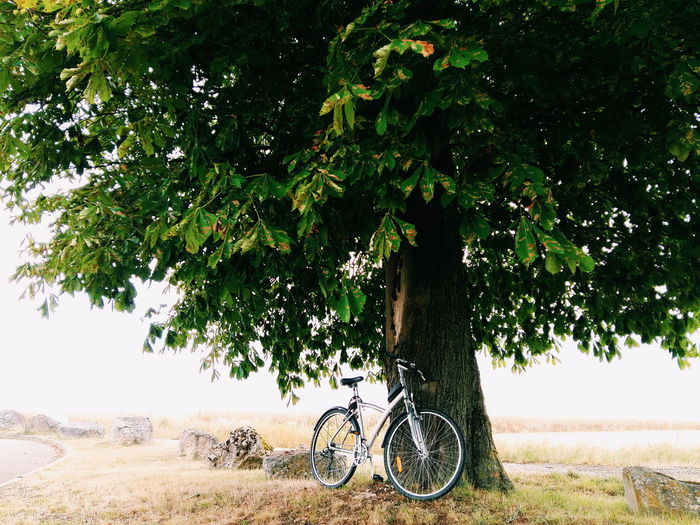 Bicycle by tree against sky