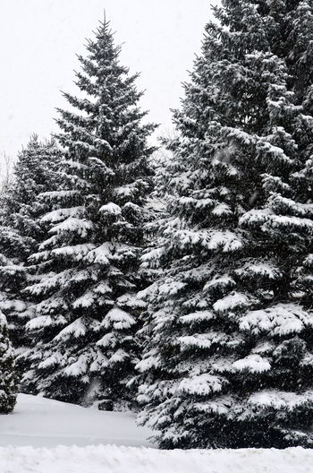 Winter Snow Tree Cold Temperature Coniferous Tree Christmas Christmas Tree No People Fir Tree Nature Outdoors Beauty In Nature Day