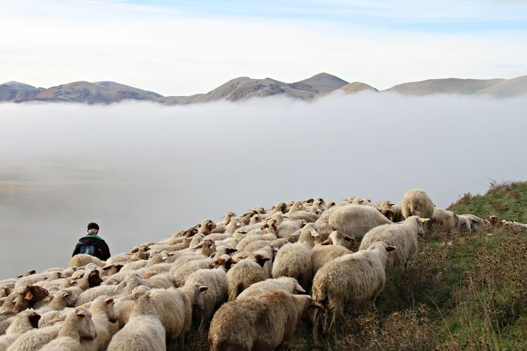 Adult Adults Only Animal Animal Themes Day Flock Of Sheep Food Full Length Landscape Mammal Mountain Nature One Man Only One Person Only Men Outdoors People Sheep Sitting Sky Young Adult
