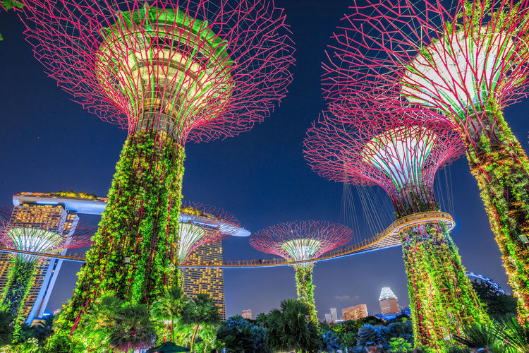 panorama of Supertree Grove with skybridge at Gardens by the Bay illuminated at blue hour and Marina Bay Sands in Marina Bay area. Popular tourist attraction in Singapore. Singapore Singapore View Singapore City Night Trees Trees And Sky Garden Garden Of The Bay Gardens By The Bay Gardens By The Bay Singapore Gardens By The Bay Domes Domestic Animals Aerial View Skyline Cityscape Pond Sunset Twilight Southeast Asia Marina Bay Lily Pond Waterfront Light Show SuperTree Supertree Grove Plant Illuminated Tree Motion Nature Architecture Sky Multi Colored No People Low Angle View Building Exterior Arts Culture And Entertainment Built Structure Outdoors Blurred Motion Glowing Celebration Lighting Equipment City Light