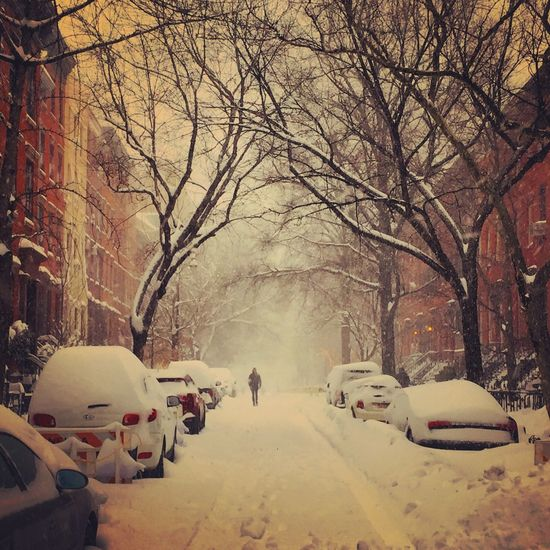 New York NYC Photography Winterstormjonas West Village , Manhattan , NY. Snow ❄ New York ❤ Winter West Village Nycblizzrad2016 New York City Outdoors Season  Treelined Tranquility Branch Cityscapes Cityscape City Life