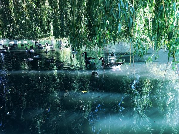 Water Reflection Tree Nature Outdoors Day Lake Beauty In Nature Animal Themes Bird