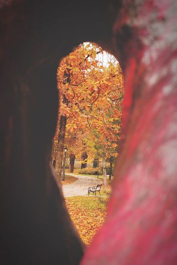 Fall Autumn Autumn Colors Autumn🍁🍁🍁 Leaves Autumnleaves Detail Nature Nature Photography Park Sculpture Canon Canonphotography Canon50D Samyang8mm