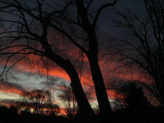 Low angle view of silhouette bare trees at sunset