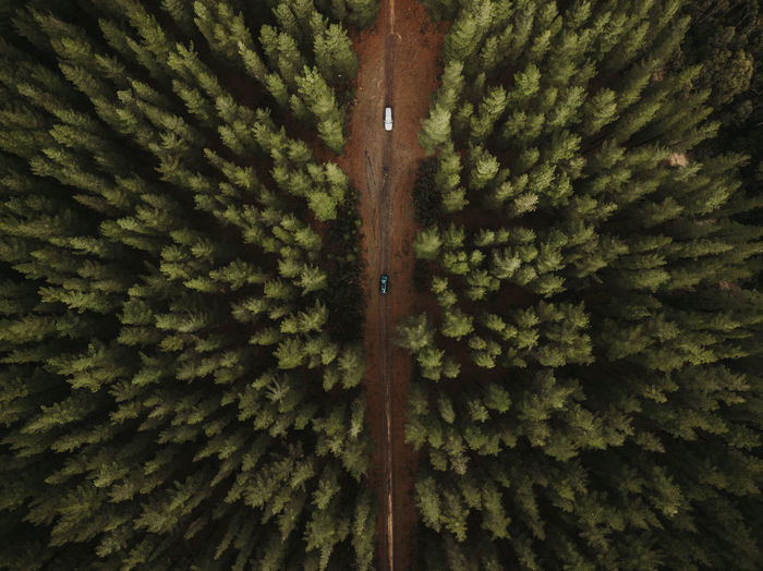 Plant No People Green Color Tree Growth Full Frame Day Beauty In Nature Nature Forest Close-up Backgrounds Outdoors Pattern Land Wood - Material Pine Tree Natural Pattern Symmetry Coniferous Tree Aerial View Aerial Dj Cars Vehicle Path Road