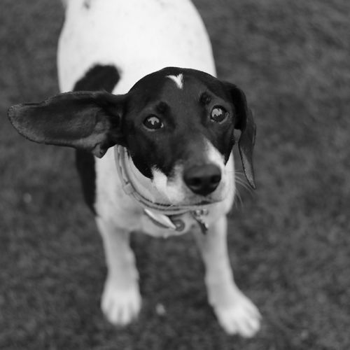 Did you said weekend ??!!! Eyestoriestudio Almostweekend  Blackandwhite Photography Black And White Animals Dogs Of EyeEm Popular Dogphotography Dogportrait