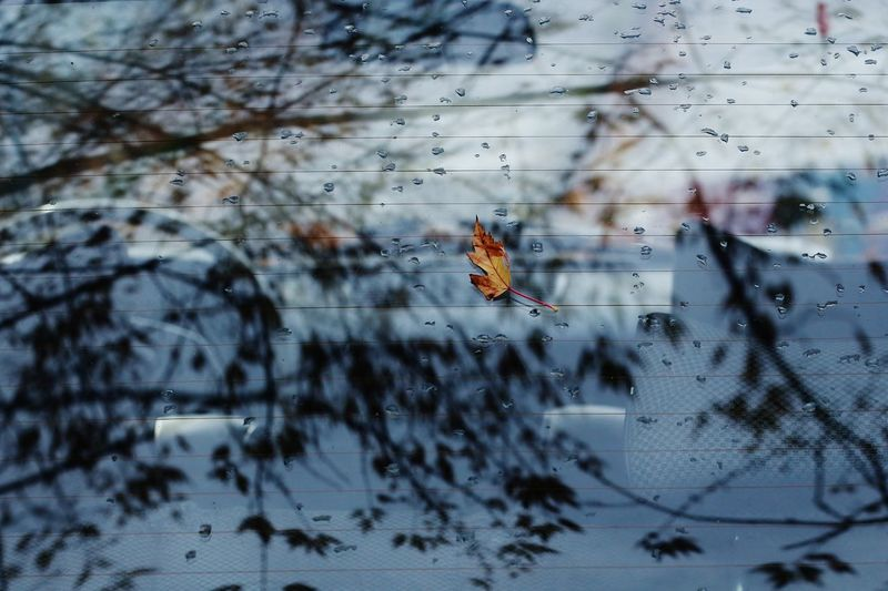 View of insect on glass window
