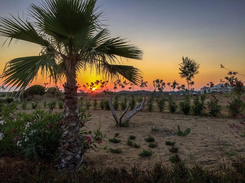 Sunset Palm Beauty In Nature Landscape Palm Tree Sunset Tranquil Scene