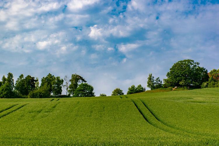 Fields in