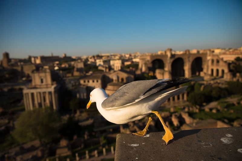 Close-up of seagull against buildings in city against sky