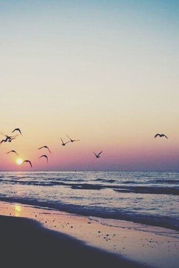 Sea And Sky Dawn Fly Beautiful