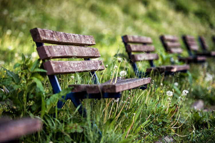 Empty benches on grassy field