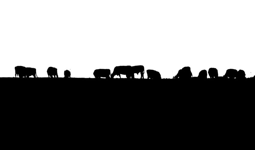 American Bison African Elephant Bird Silhouette Group Of Animals Agriculture Full Length Oil Pump Herd Animal Themes