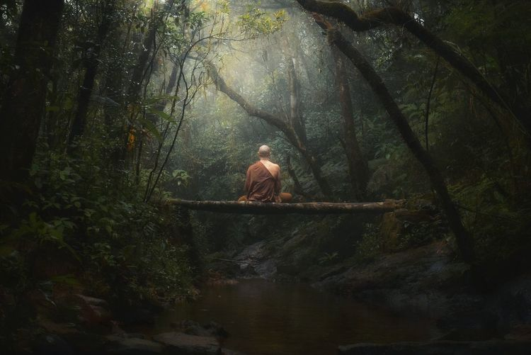 Jungle monk Adult Outdoors Tranquility Tree Trunk Trunk Day Growth Leisure Activity Sitting Lifestyles WoodLand Nature Real People One Person Land Plant Forest Tree Buddhist Buddhism