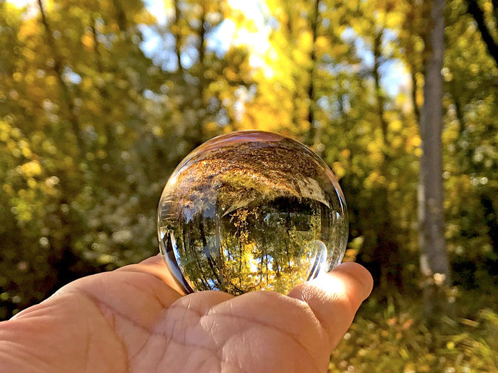 Cropped hand holding crystal ball with reflection of trees